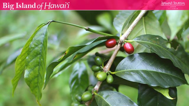 >Vol.3 ORGANIC FOOD 豊かな自然が育んだ、オーガニックコーヒー農園、バニラ農園を訪れる